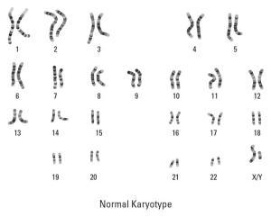 Arreglo cromosómico en un Cariotipo