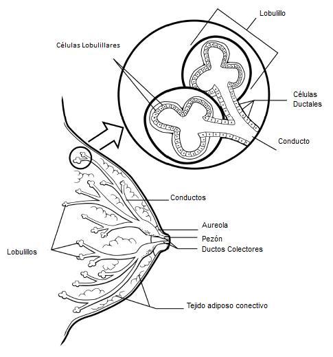 Cáncer | Biota et Scientia