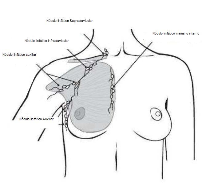 Anatomía | Biota et Scientia