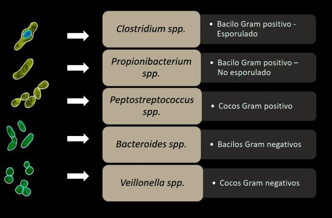 Bacterias Anaerobias